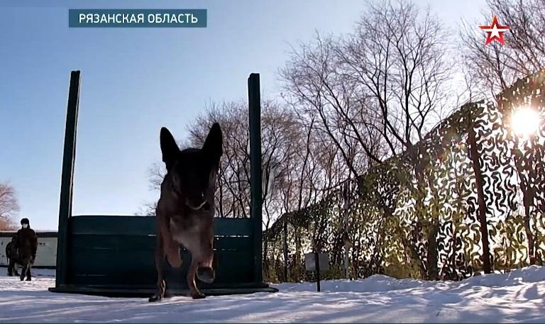 Подготовка к армейским соревнованиям кинологов в Приморье — видео