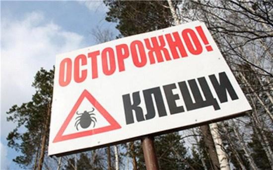 Роспотребнадзор назвал число пострадавших от укусов клещей с начала года россиян