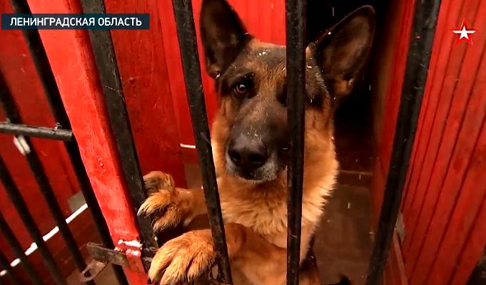 Как проходят учения минно-розыскных собак в ЗВО — видео
