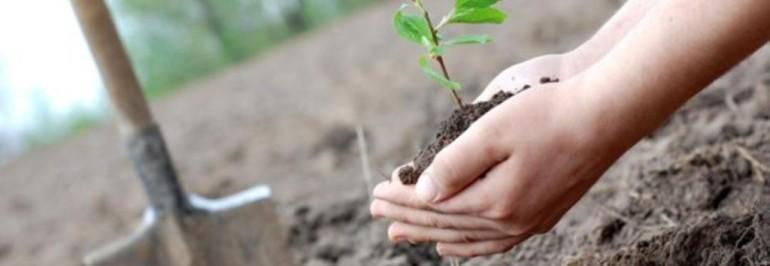 В Волжском планируется высадить более 600  деревьев