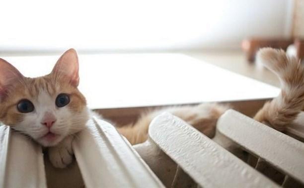 Минстрой запретил замуровывать кошек в подвалах