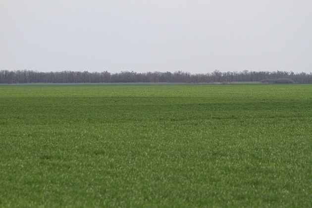 Озимые в Волгоградской области пережили сезон хорошо - в этом году посеяно на 300 тысяч га больше