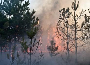 От огня удалось спасти 40 населенных пунктов в районах Волгоградской области