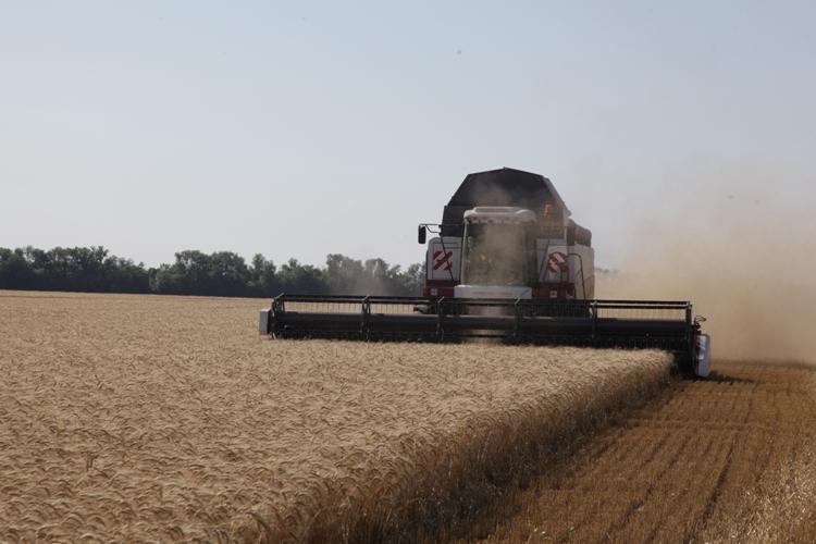 В Волгоградской области перекрыт показатель прошлого года по уборке зерна